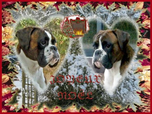 joyeux anniversaire chien boxer