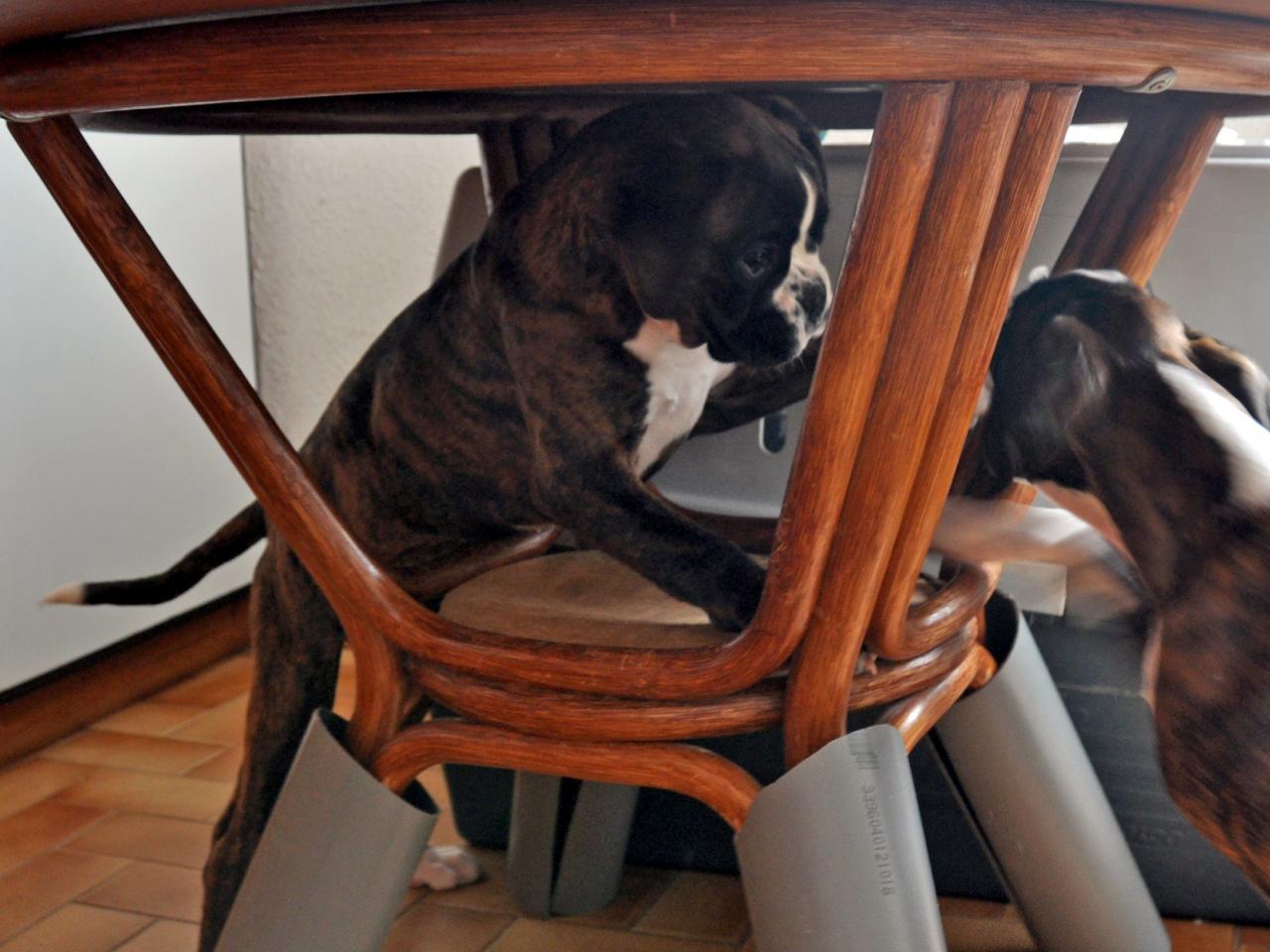 giotto et gueni vre de 1 mois 1 2 4 mois 1 2. Black Bedroom Furniture Sets. Home Design Ideas