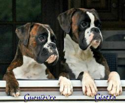 Giotto et Guenièvre du Dolon